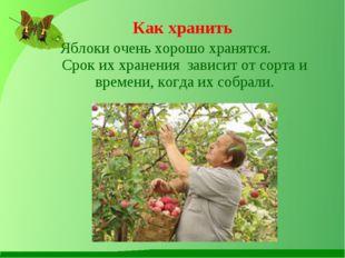 Яблоки очень хорошо хранятся. Срок их хранения зависит от сорта и времени, к