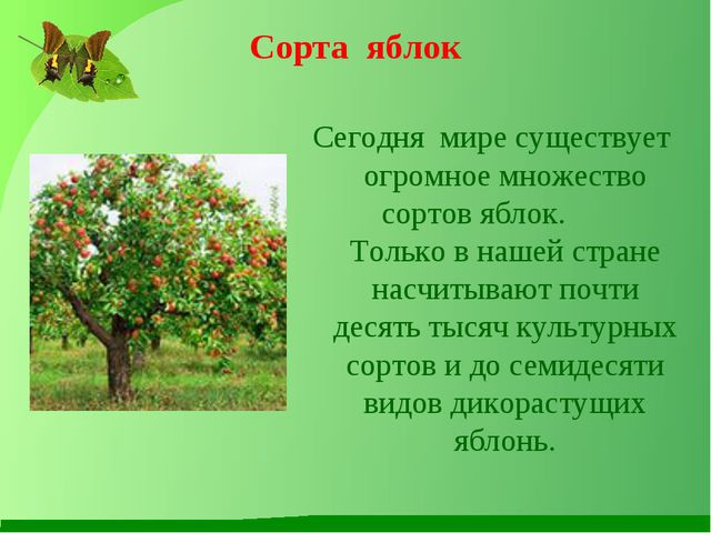 Сорта яблок Сегодня мире существует огромное множество сортов яблок. Только в...