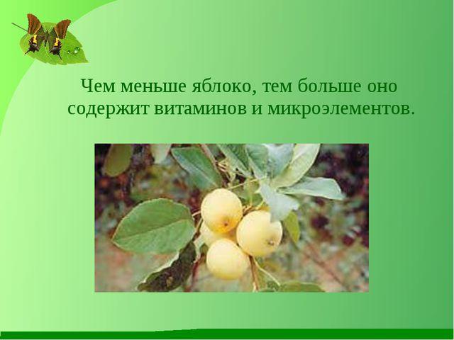 Чем меньше яблоко, тем больше оно содержит витаминов и микроэлементов.