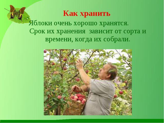 Яблоки очень хорошо хранятся. Срок их хранения зависит от сорта и времени, к...