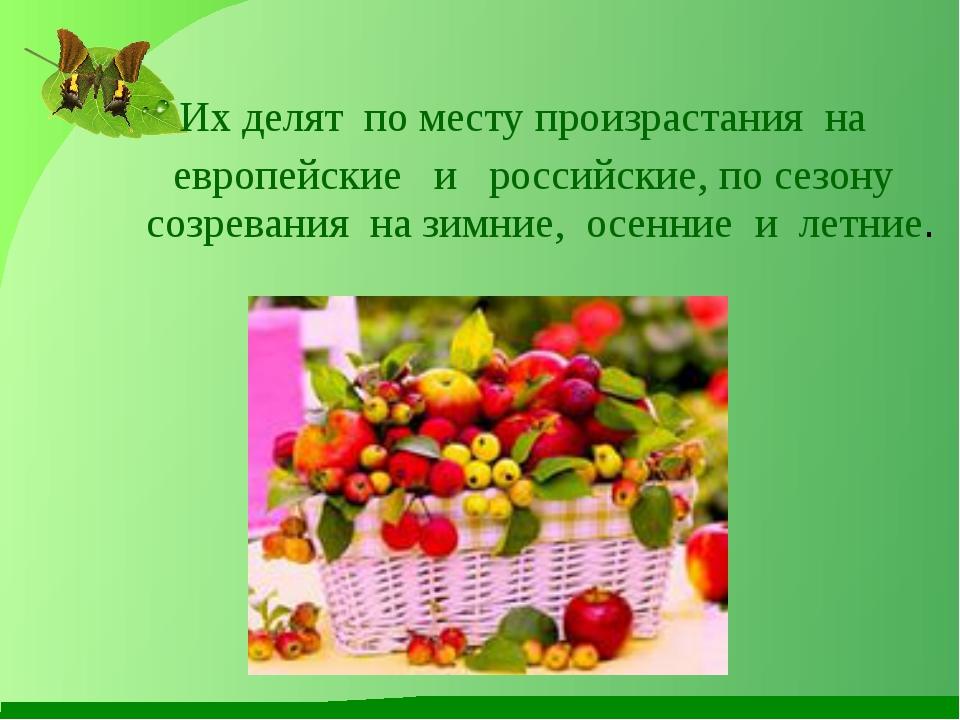 Их делят по месту произрастания на европейские и российские, по сезону созрев...