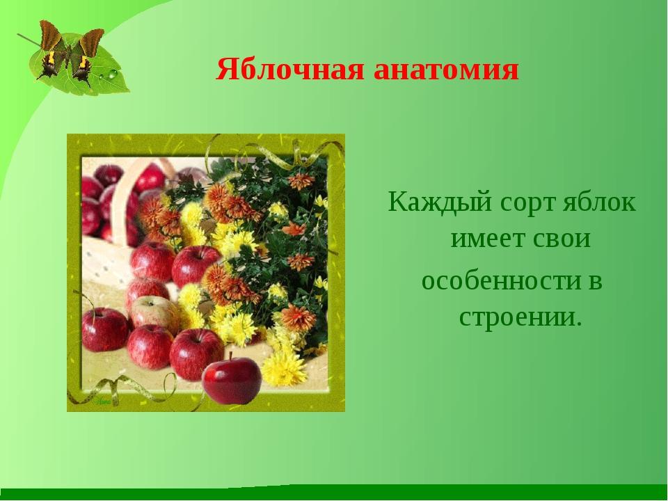 Яблочная анатомия Каждый сорт яблок имеет свои особенности в строении.