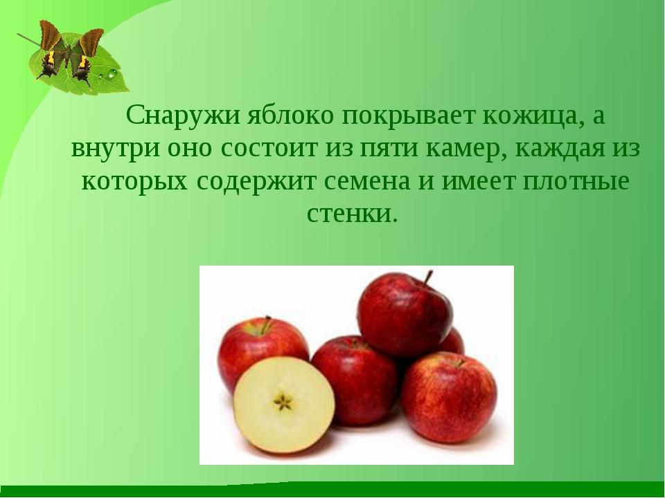 Снаружи яблоко покрывает кожица, а внутри оно состоит из пяти камер, каждая...