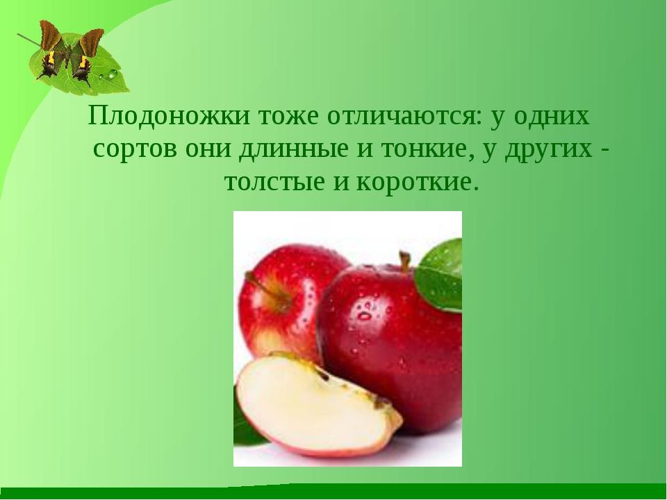 Плодоножки тоже отличаются: у одних сортов они длинные и тонкие, у других - т...
