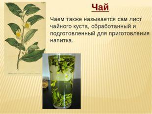 Чай Чаемтакже называется сам лист чайного куста, обработанный и подготовленн