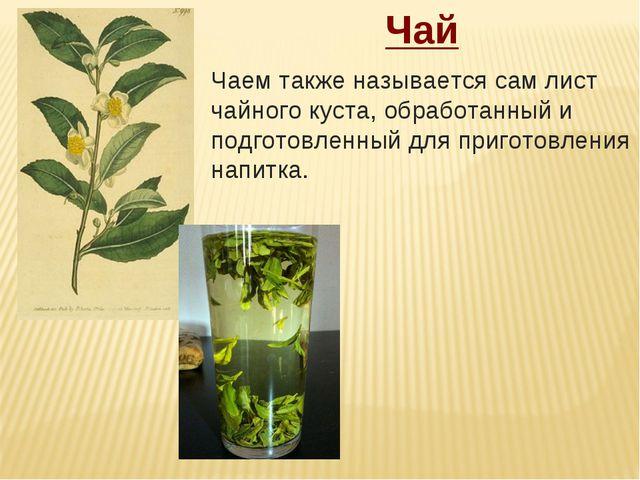 Чай Чаемтакже называется сам лист чайного куста, обработанный и подготовленн...