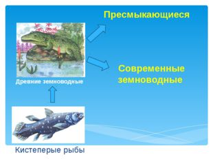 Кистеперые рыбы Древние земноводные Пресмыкающиеся Современные земноводные