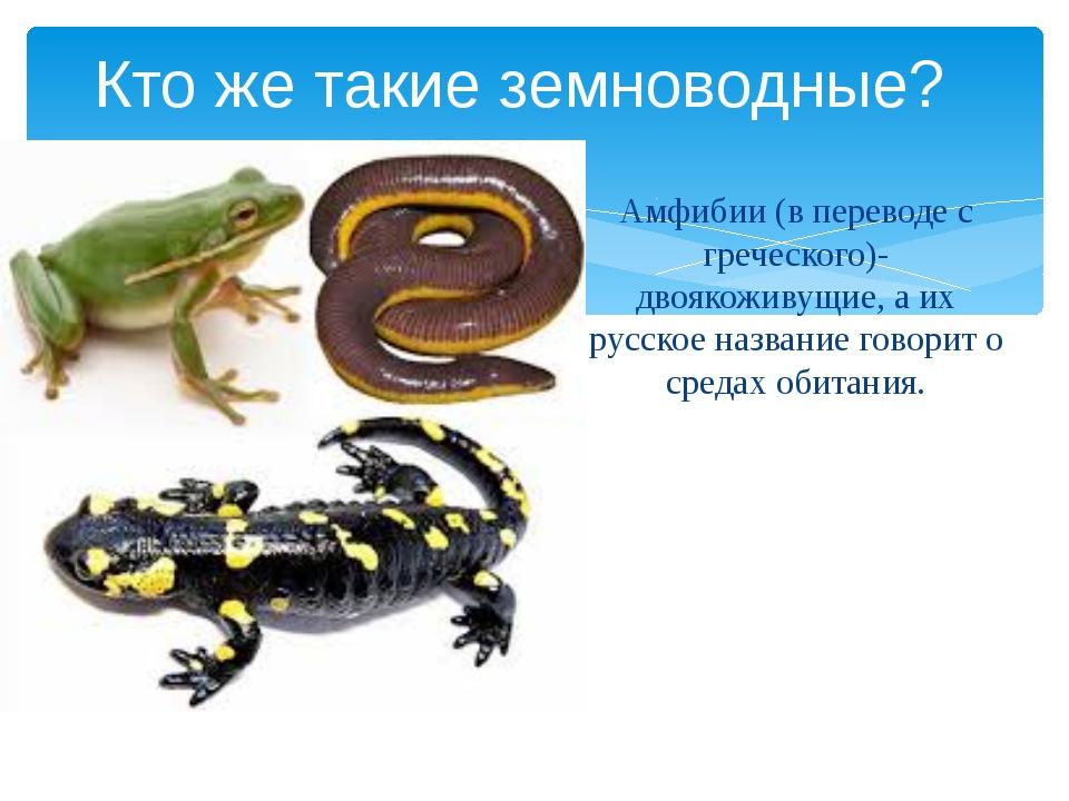 Амфибии (в переводе с греческого)- двоякоживущие, а их русское название говор...