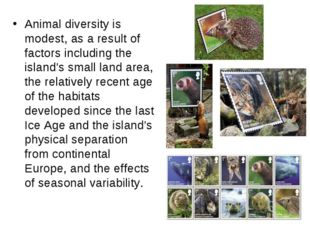 Animal diversity is modest, as a result of factors including the island's sma