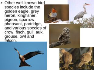 Other well known bird species include the golden eagle, grey heron, kingfishe