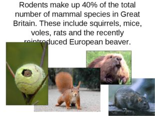 Rodents make up 40% of the total number of mammal species in Great Britain. T