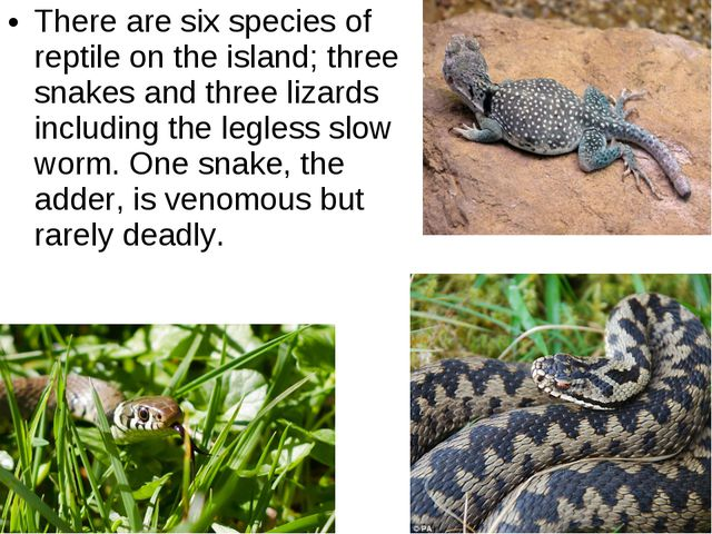 There are six species of reptile on the island; three snakes and three lizard...