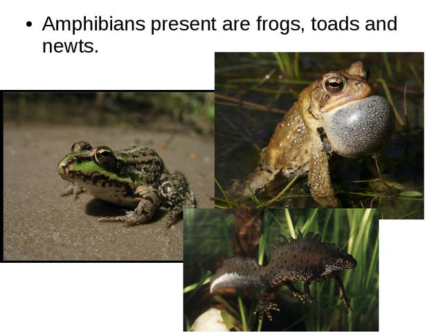 Amphibians present are frogs, toads and newts.