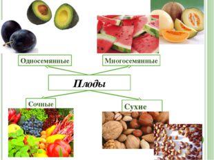 Вывод Цветковое растение состоит из корня, побега, цветка, почек, плодов, сте