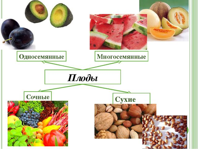 Вывод Цветковое растение состоит из корня, побега, цветка, почек, плодов, сте...