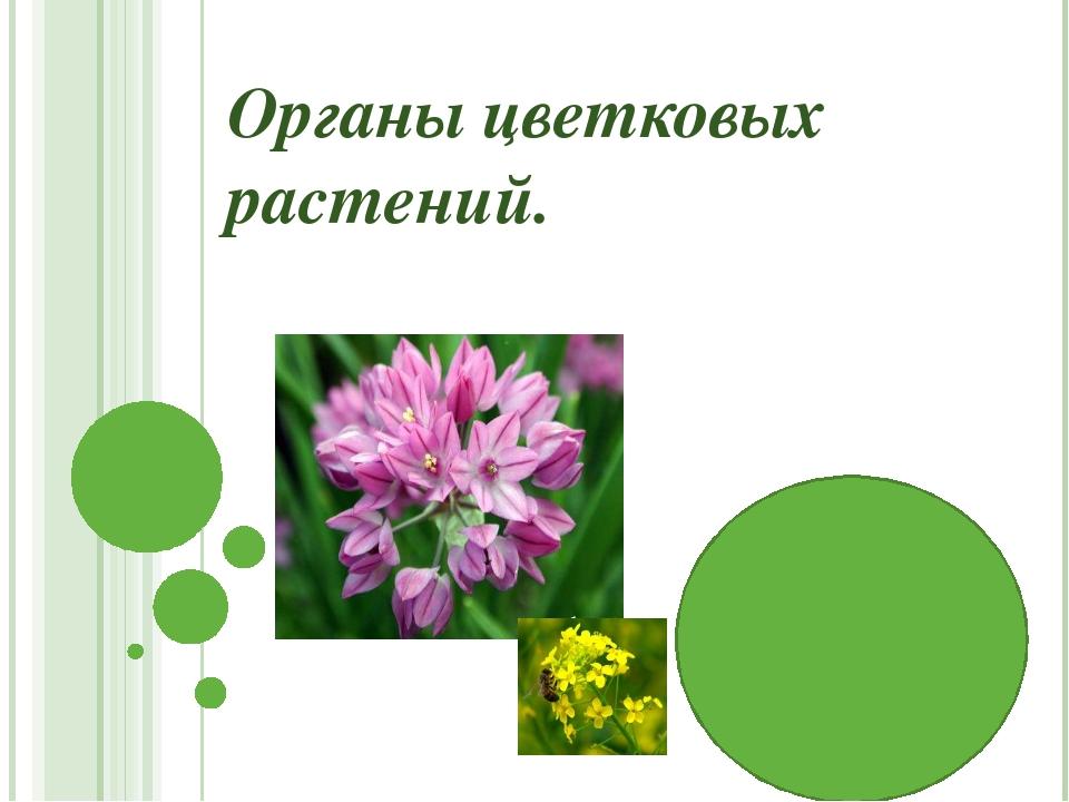 Органы цветковых растений.