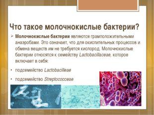 Что такое молочнокислые бактерии? Молочнокислые бактерии являются грамположит