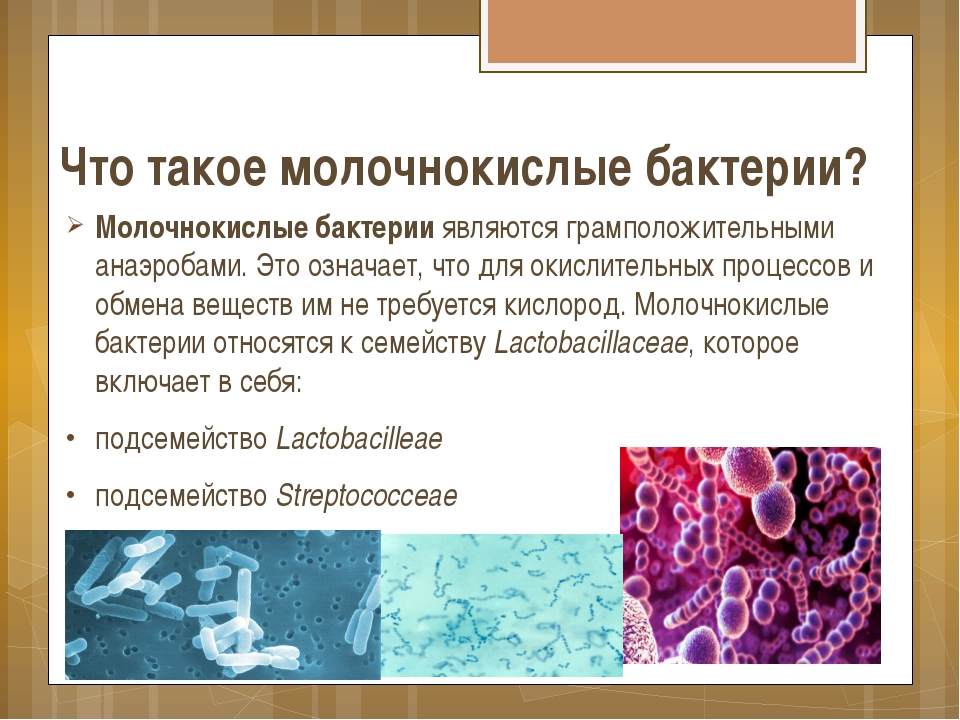 Доклад про кисломолочные бактерии 2388