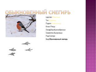 Царство:Животные Тип:Хордовые Подтип:Позвоночные Класс:Птицы Отряд:Воробьиноо