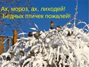 Ах, мороз, ах, лиходей! Бедных птичек пожалей!
