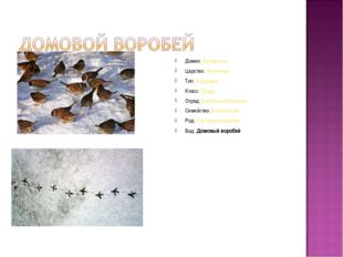 Домен:Эукариоты Царство:Животные Тип:Хордовые Класс:Птицы Отряд:Воробьин