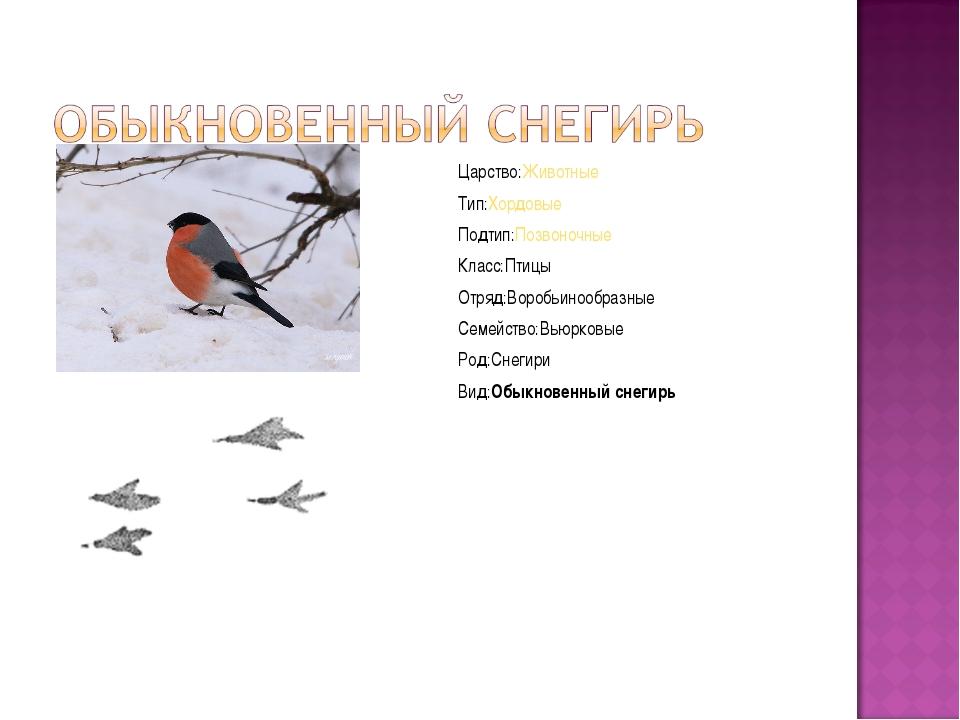 Царство:Животные Тип:Хордовые Подтип:Позвоночные Класс:Птицы Отряд:Воробьиноо...
