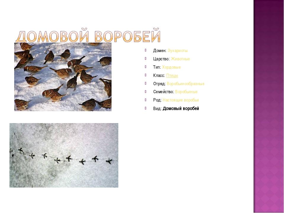 Домен:Эукариоты Царство:Животные Тип:Хордовые Класс:Птицы Отряд:Воробьин...