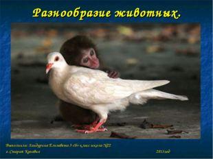 Разнообразие животных. Выполнила: Хандурина Елизавета 3 «Б» класс школа №22 г