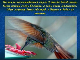 На земле насчитывается около 9 тысяч видов птиц. Есть птицы очень большие, а