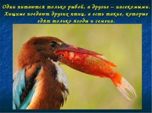 Одни питаются только рыбой, а другие – насекомыми. Хищные поедают других птиц