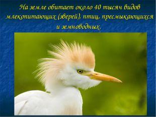 На земле обитает около 40 тысяч видов млекопитающих (зверей), птиц, пресмыкаю