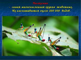 Насекомые - самая многочисленная группа животных. Их насчитывается около 200