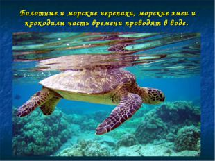 Болотные и морские черепахи, морские змеи и крокодилы часть времени проводят
