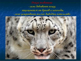 Дикие животные - сами добывают пищу, - защищаются от врагов и непогоды, - сам