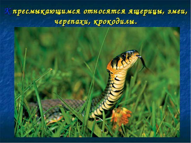 К пресмыкающимся относятся ящерицы, змеи, черепахи, крокодилы.