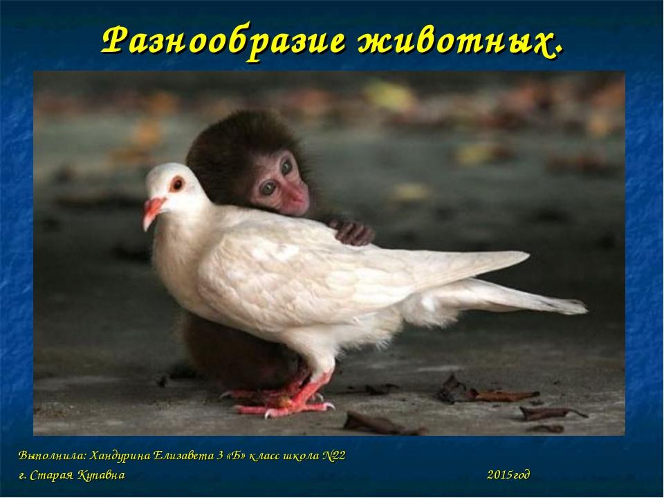 Разнообразие животных. Выполнила: Хандурина Елизавета 3 «Б» класс школа №22 г...