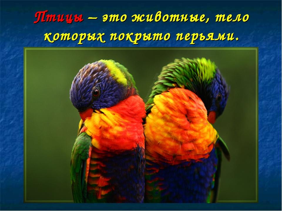 Птицы – это животные, тело которых покрыто перьями.