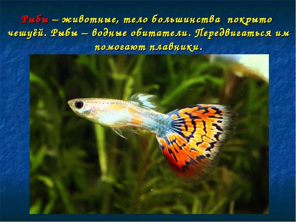 Рыбы – животные, тело большинства покрыто чешуёй. Рыбы – водные обитатели. Пе...