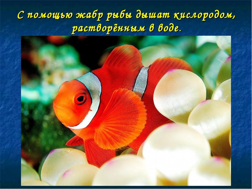 С помощью жабр рыбы дышат кислородом, растворённым в воде.