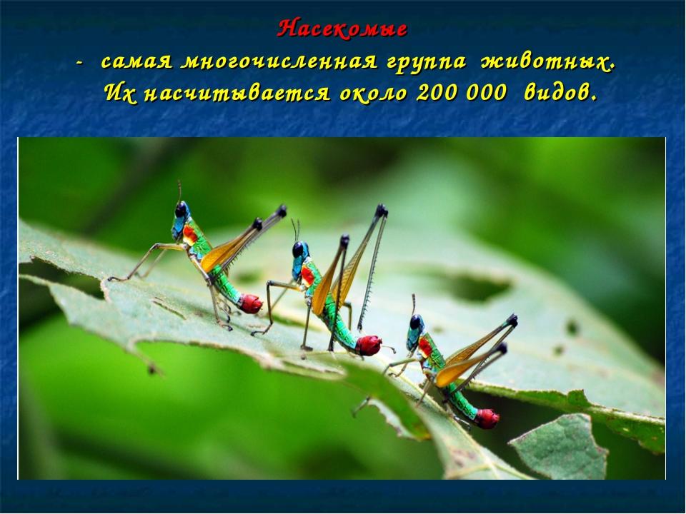 Насекомые - самая многочисленная группа животных. Их насчитывается около 200...