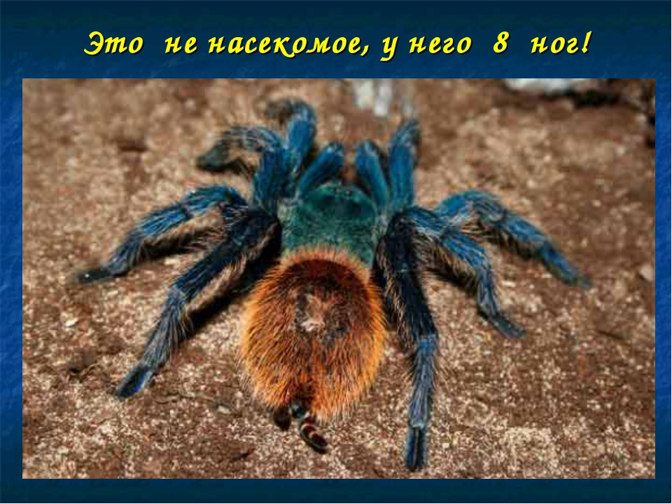 Это не насекомое, у него 8 ног!