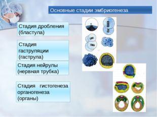 Основные стадии эмбриогенеза Стадия дробления (бластула) Стадия гаструляции (