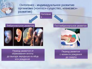 Онтогенез - индивидуальное развитие организма («онтос»-существо, «генезис»-р