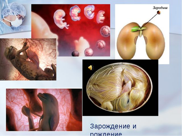 Зарождение и рождение