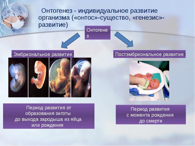 Онтогенез - индивидуальное развитие организма («онтос»-существо, «генезис»-р...