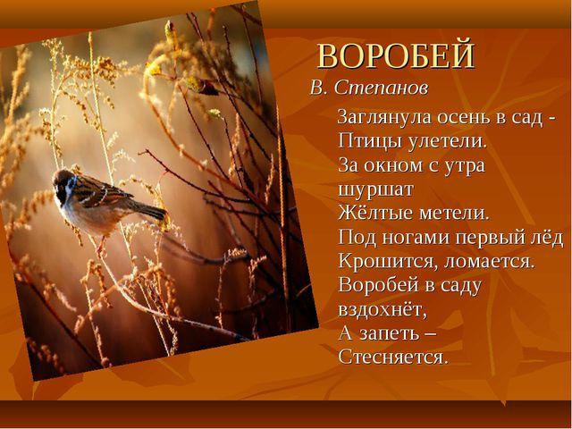 ВОРОБЕЙ В. Степанов Заглянула осень в сад - Птицы улетели. За окном с утра шу...