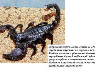 Скорпионы имеют много общего со своими сородичами пауками, но спутать их нево