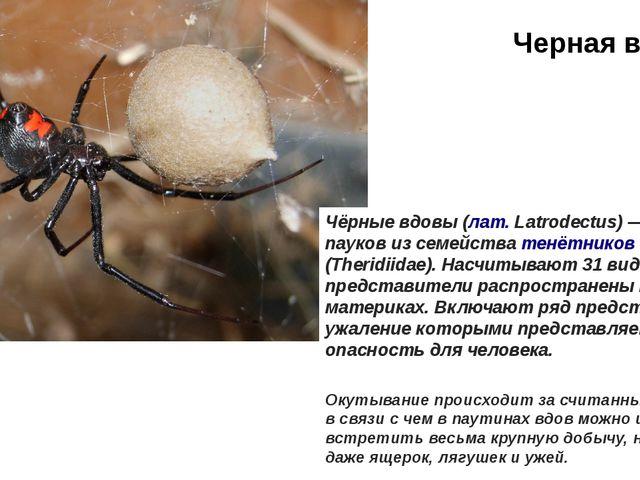 Черная вдова Окутывание происходит за считанные минуты, в связи с чем в паути...