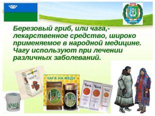 Березовый гриб, или чага,- лекарственное средство, широко применяемое в нар