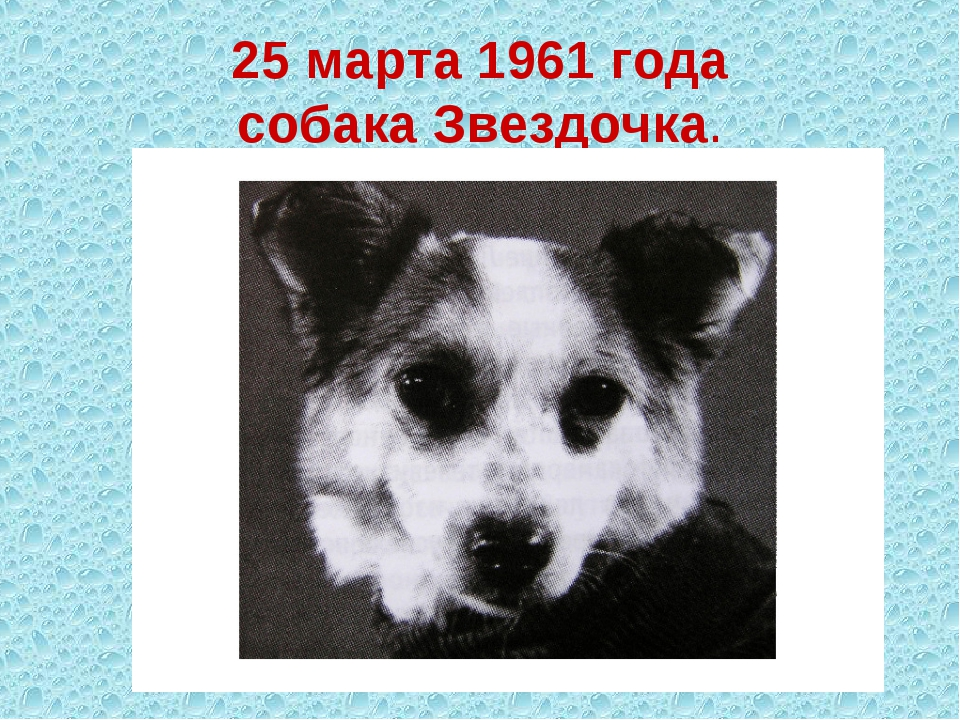25 марта 1961 года собака Звездочка.
